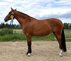 Devota de Kara (Fer Avellado & Jota CA) Kara Pura Raza Española PRE spanska hästar