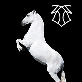 Yedra VIII – Kara Pura Raza Española PRE spanska hästar