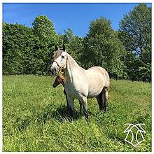 Hera XXX & Elvira de Kara, 2016 Kara Pura Raza Española PRE spanska hästar