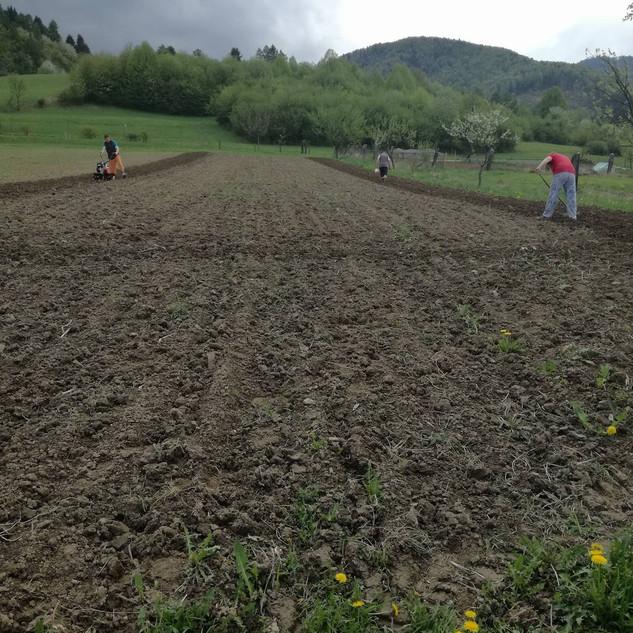 príprava pôdy