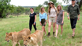 LION WALK.jpg
