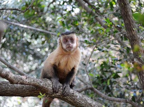 Bush Babies Monkey Sanctuary