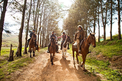 African Horse Company