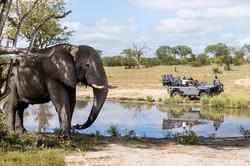 silvan-safari-activities-game-drive-elep