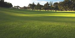 Royal Cape Golf Club 8