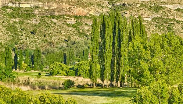 Clarens Golf Estate Spring 4 crop