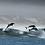 Thumbnail: Ocean Blue Adventures