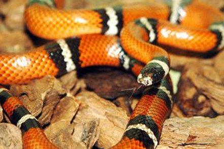 Bayworld Snake Park