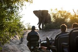 silvan-safari-activities-game-drive-copy