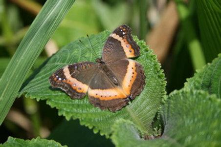 Butterfly Valley butterfly farm