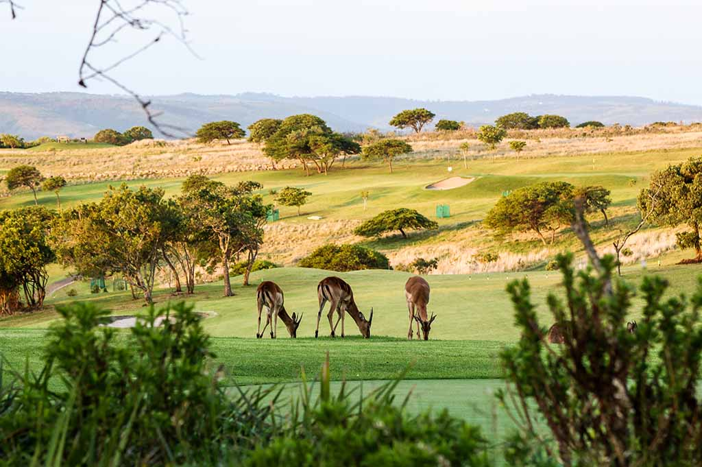 Olivewood-Golf-Course-11