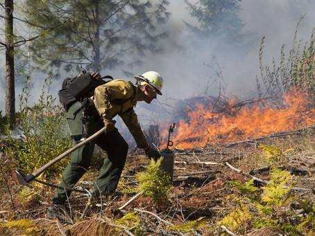 Friendly fires: Training exchange teaches controlled burn strategies in Roslyn