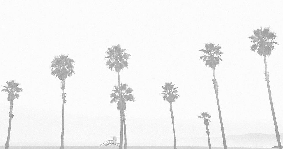 palm_bg.jpg