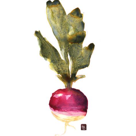 """""""Turnip"""""""