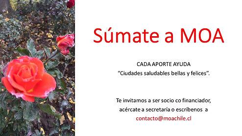Campaña_súmate_a_MOA_inicio.jpg