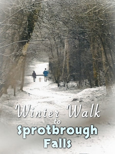 Winter Walk to Sprotbrough Falls