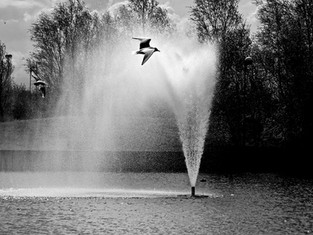 Lakeside Fountain, Doncaster