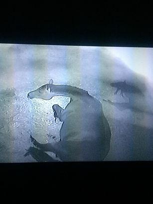 Nächtliche Überwachung per Video