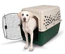 Pet Dog in a Travel Crate