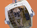 Pet in Travel Crate