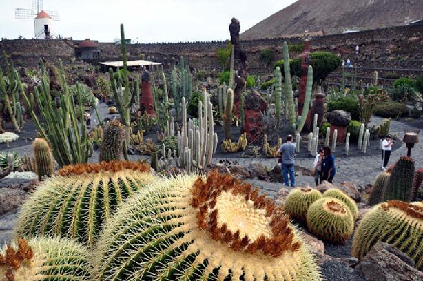 cacti garden.jpg