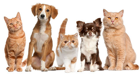 CATS AND DOGS.jfif