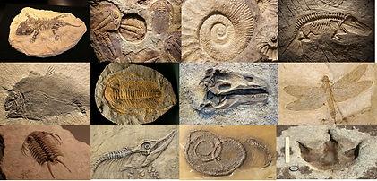 Fossils.jpg