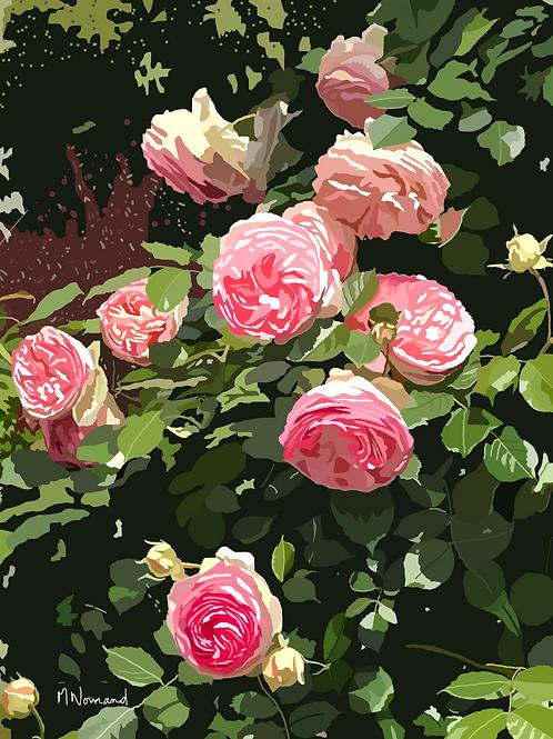 roses anciennes/ Poster encadré bois 30x45