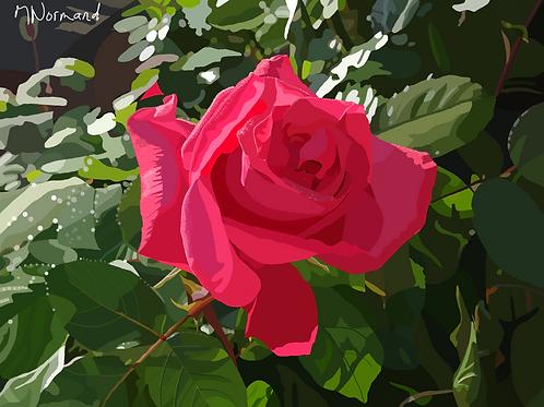 Une rose/ Caisse américaine papier 165g 30x40