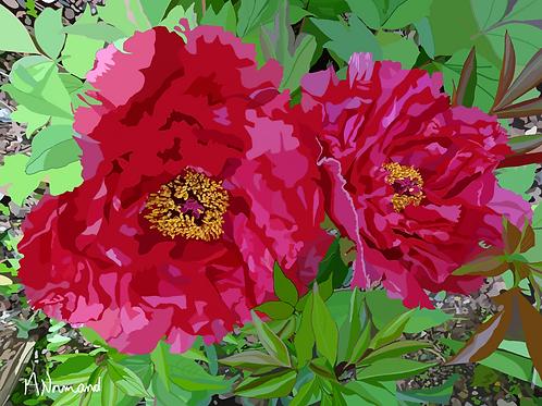 2019-04-08 des pivoines dans le jardin/ Poster sans cadre 30x45