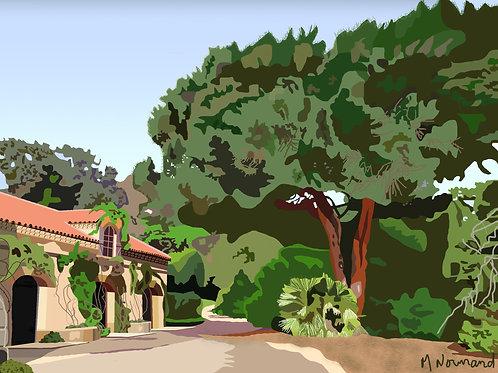 Var-jardin-pin parasol / Poster sans cadre 30x45