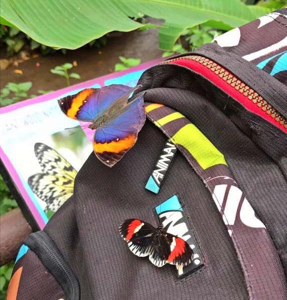 All Creation Is Groaning – Butterfly Visitations