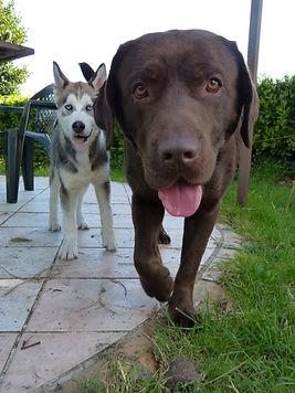 Orée de bubry - pension canine - féline - tarifs et horaires