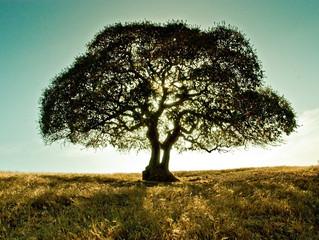 Tale of a tree...