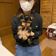 生後3か月の看板犬ニコちゃんです