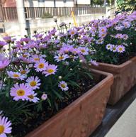 教室のお花