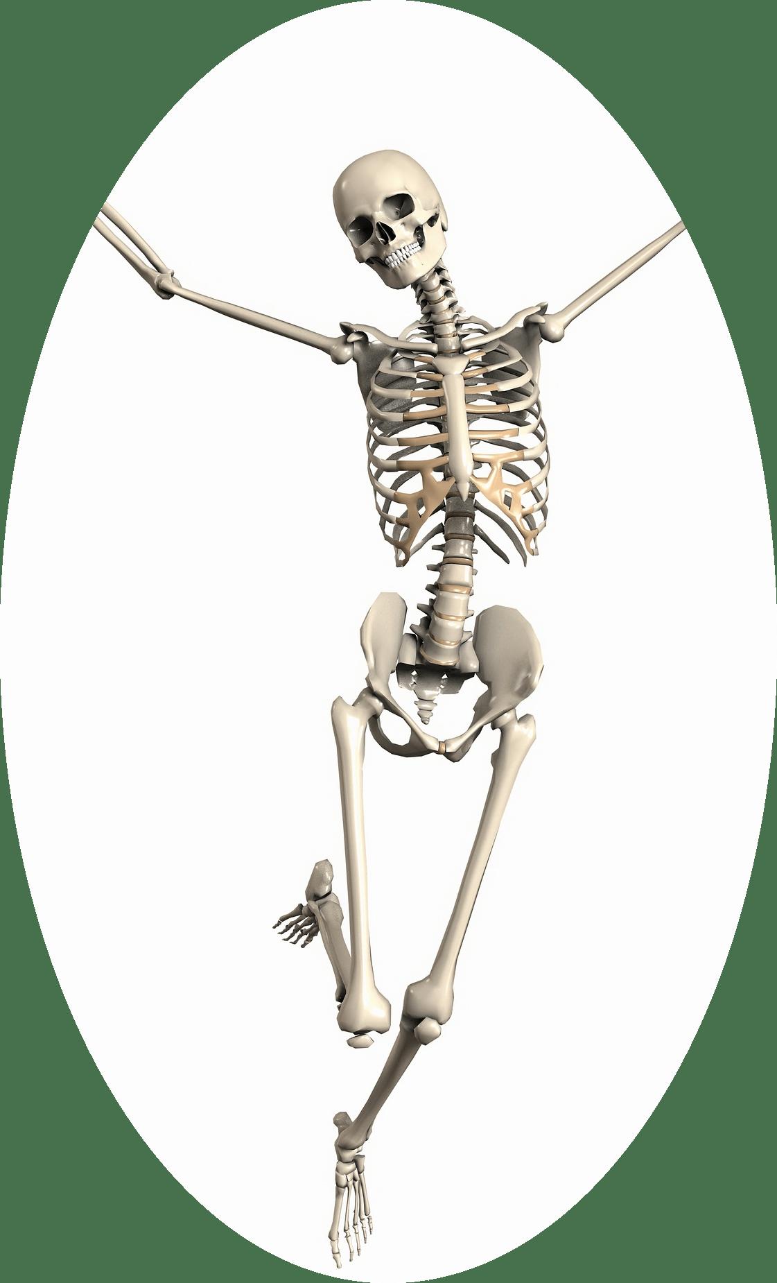 6 Week Skeletal Strength and Stability