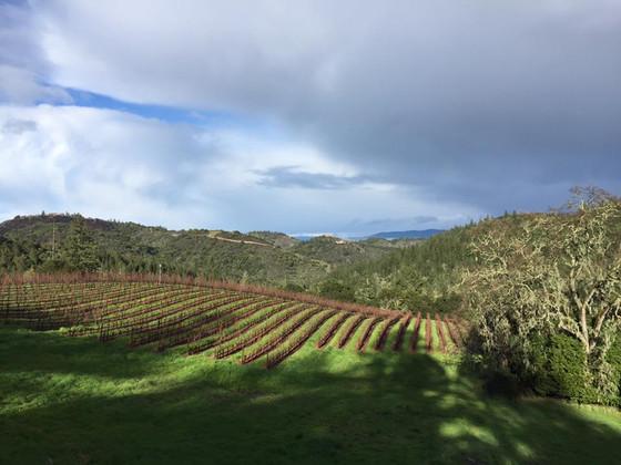 Welcome Thomas-Hsi Vineyards!