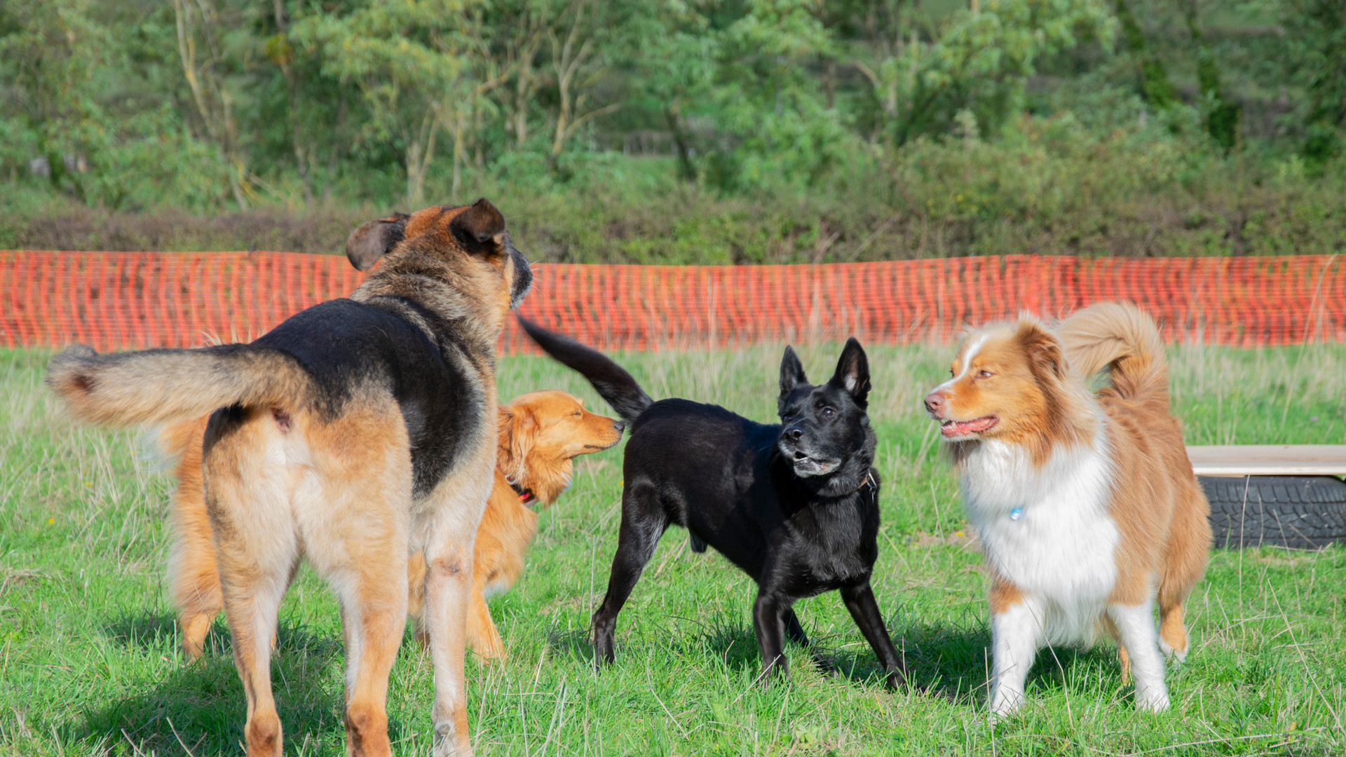 cours collectif chien