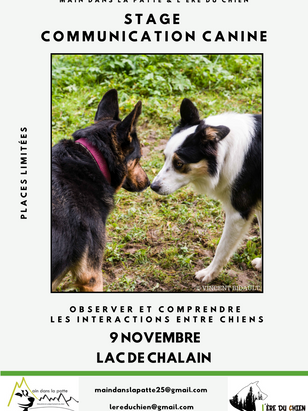 stage 9 novembre.png