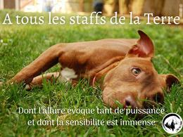 Ode aux chiens #2: À tous les staffs de la Terre