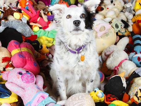 Jouets pour chiens: Déclencheur de la prédation ?