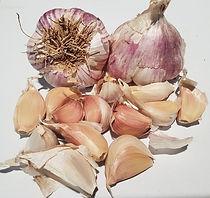 germidour ail de semence germidour plant germidour ail violet de cadour germidour