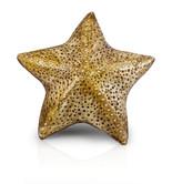 stella marina gialla.jpg