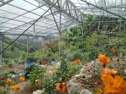 1160ft² Glass Roofed Vegetable & Herb Garden