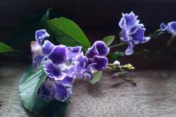 Cookie Flowers