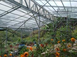 Glass Covered Garden