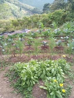 Outside Vegetable Garden