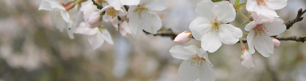 flower1-banner.jpg