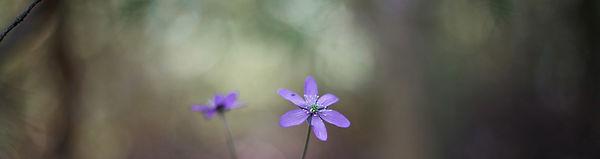 flower2-banner.jpg